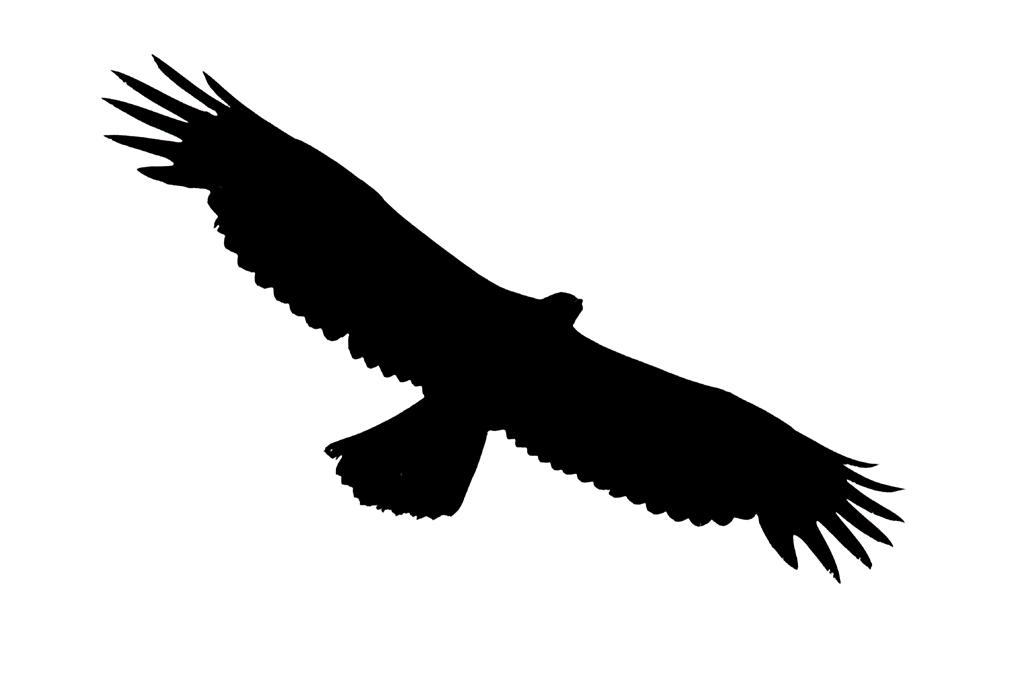 Black Eagle clipart soaring eagle Eagle Eagle Clip Clipart Clipart