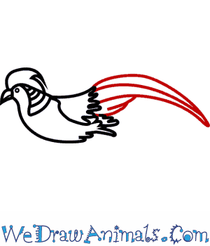 Golden Pheasant clipart Tutorial Draw Golden to How