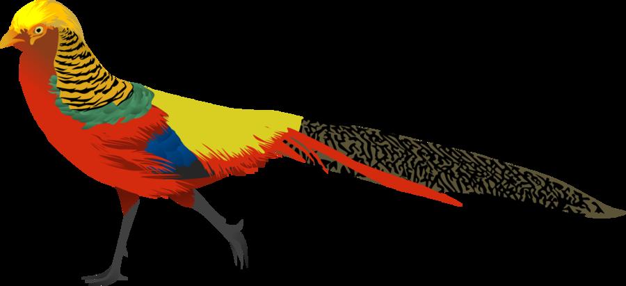 Golden Pheasant clipart DeviantArt Pheasant Golden by AdamZT2