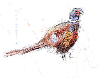 Golden Pheasant clipart Drawing Pheasant ink Bird the