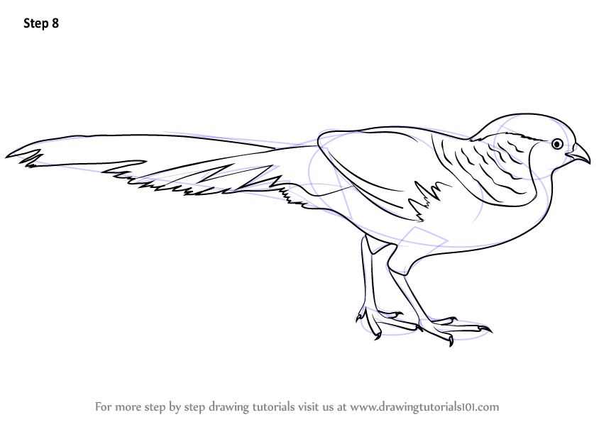 Golden Pheasant clipart Detailing a pheasant by How