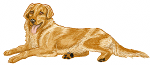 Retriever clipart Lying Golden Clip Download Down