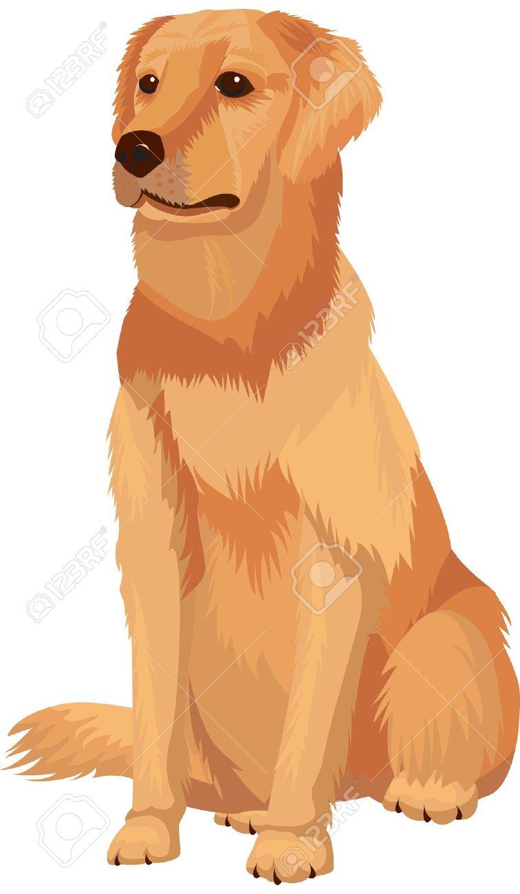 Golden Retriever clipart Labrador Download clipart Retriever Labrador