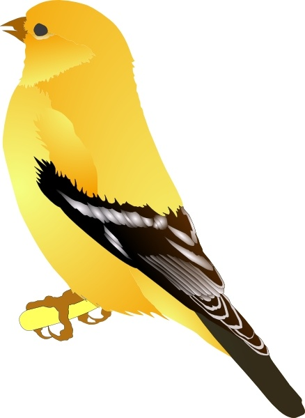 Goldfinch clipart Gold vector Free svg Open