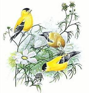 Goldfinch clipart Goldfinch Free Goldfinch Clipart