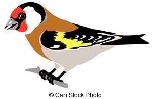 Goldfinch clipart  and Illustrations Art illustration