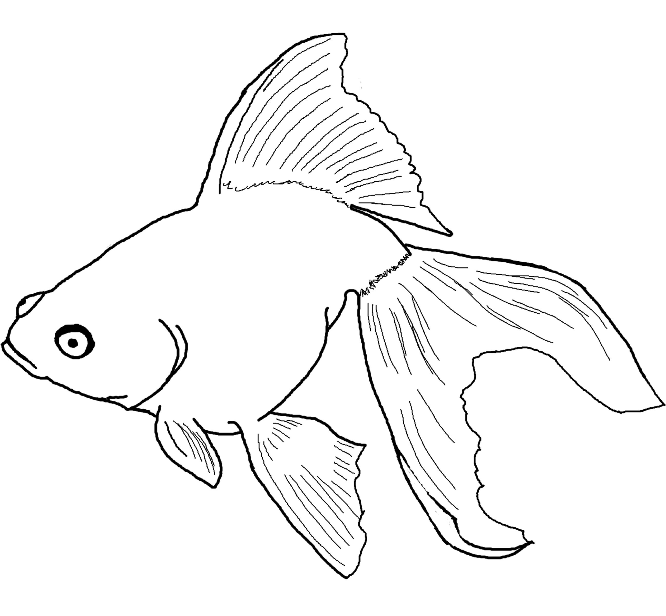 Drawn goldfish small fish Coloring Angelfish coloring drawings Download
