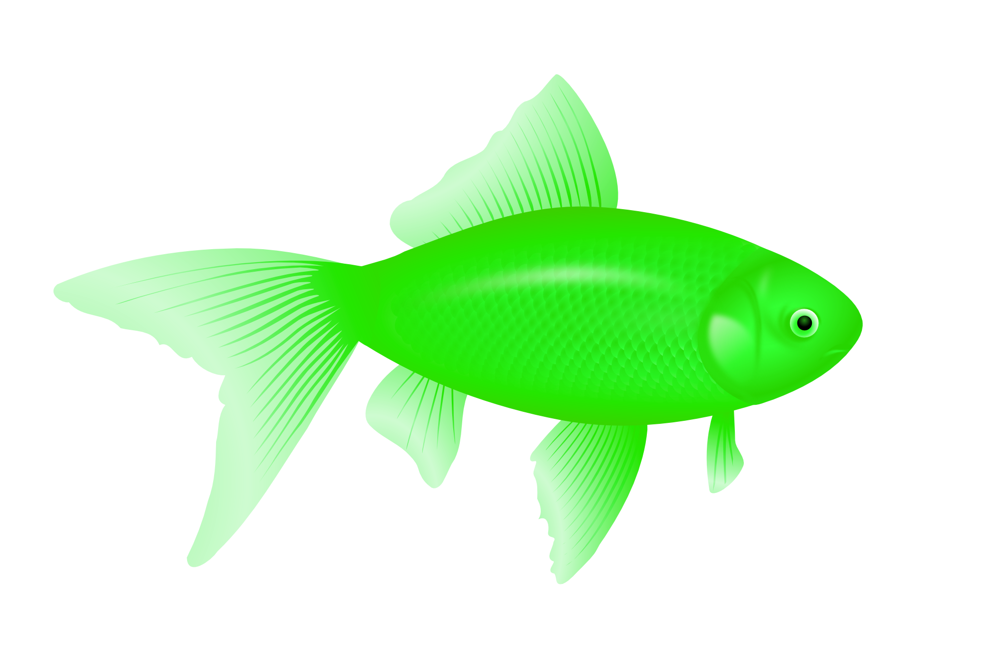 Fins clipart green fish Fish with PNG image transparent