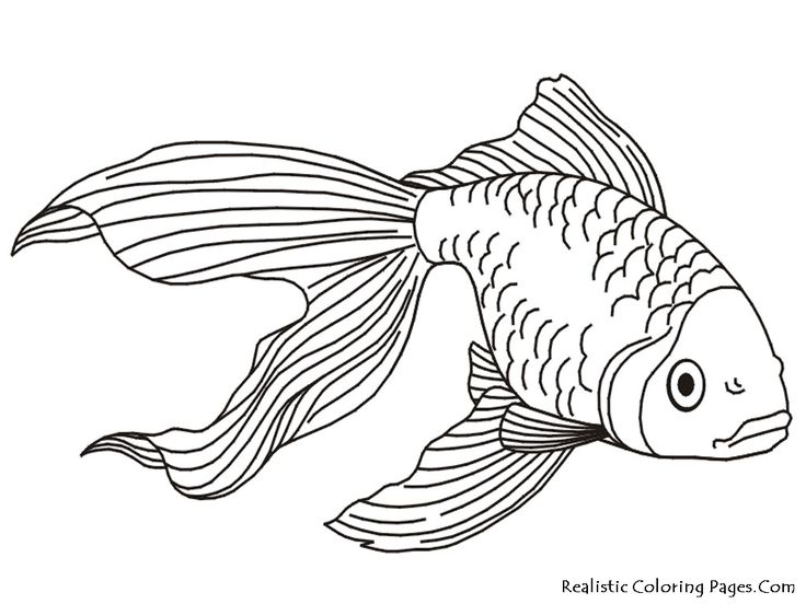 Fins clipart fish drawing Realistic painting on Coloring FISH