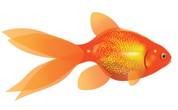 Drawn gold fish transparent background Clipart Images Elmos Goldfish Clipartion