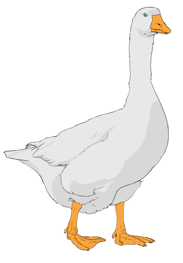 Goose clipart File:Goose clipart File:Goose svg 01