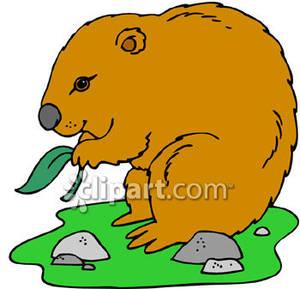 Wombat clipart cute Clipart Wombat Clip Free Panda