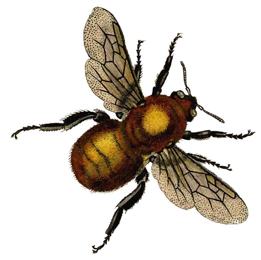 Bees clipart vintage Beautiful Fairy Clip Golden Art