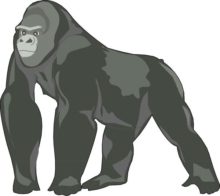 Gorilla clipart Gorilla Gorilla Clip Art Panda