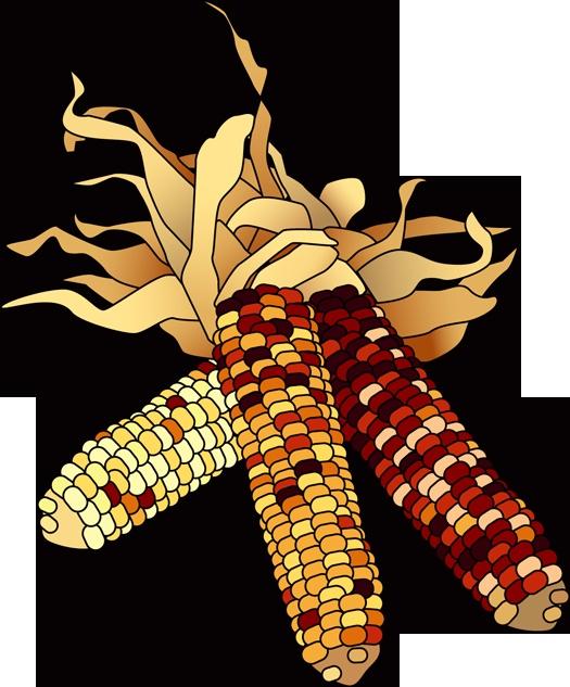 Gourd clipart corn #6