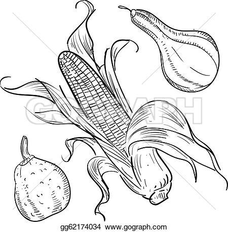 Gourd clipart corn #2