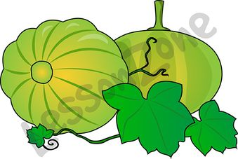 Gourd clipart green pumpkin Vine Habitats NZ Lesson Zone