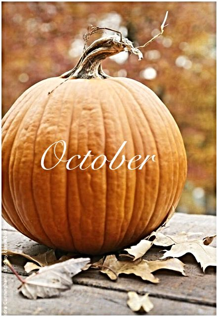 Gourd clipart october 74 Find more and on