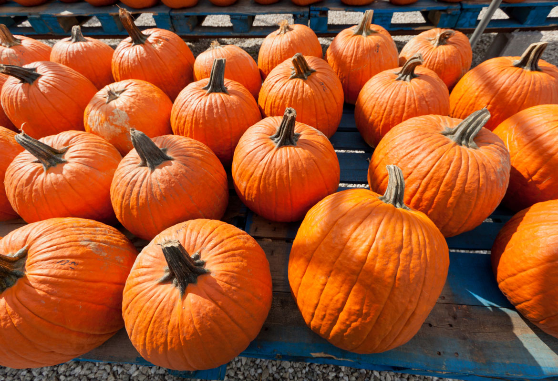 Gourd clipart pumpkin farm Celebrates  new of beginning
