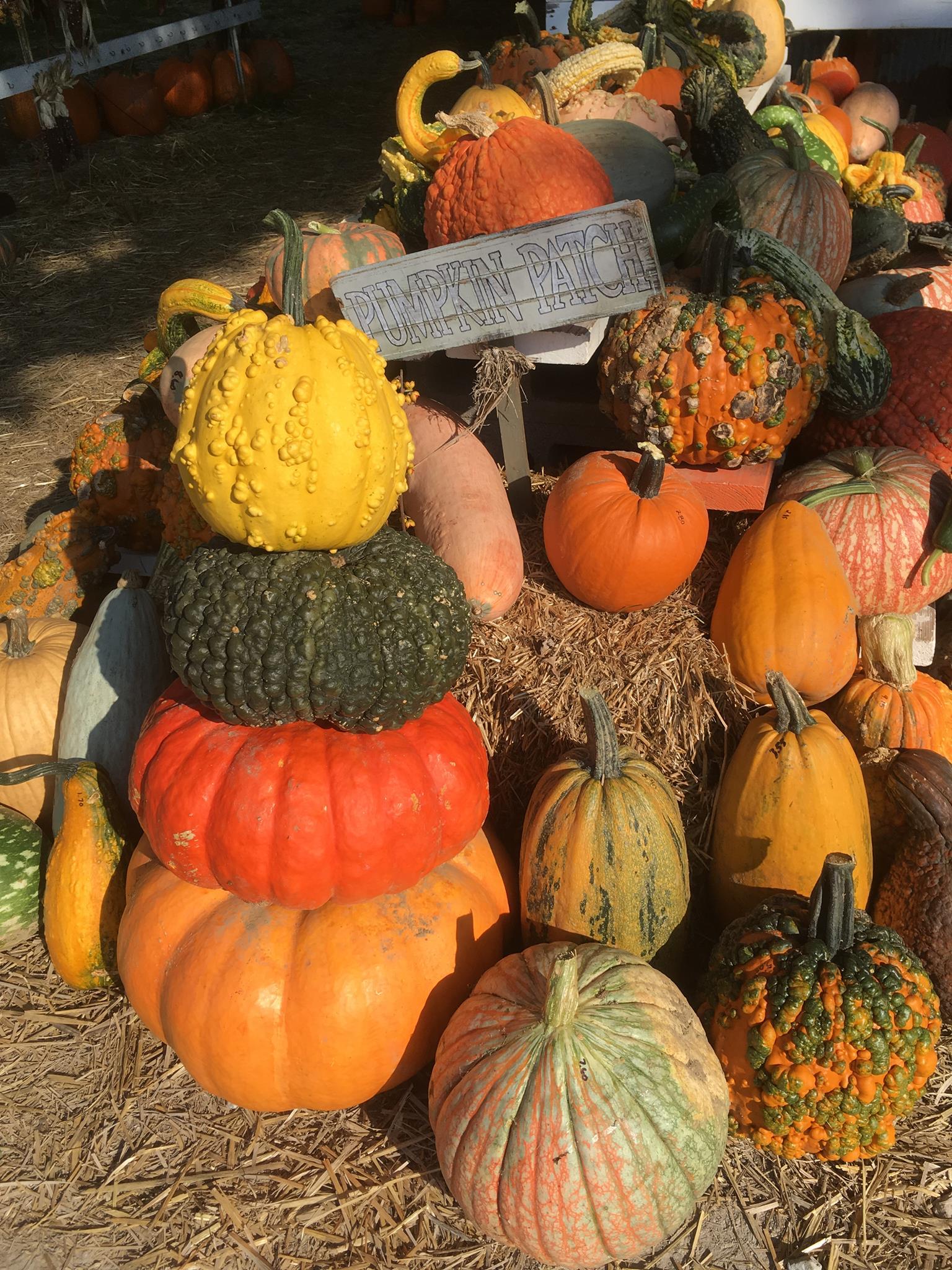 Gourd clipart pumpkin farm The More Fort Fun plenty
