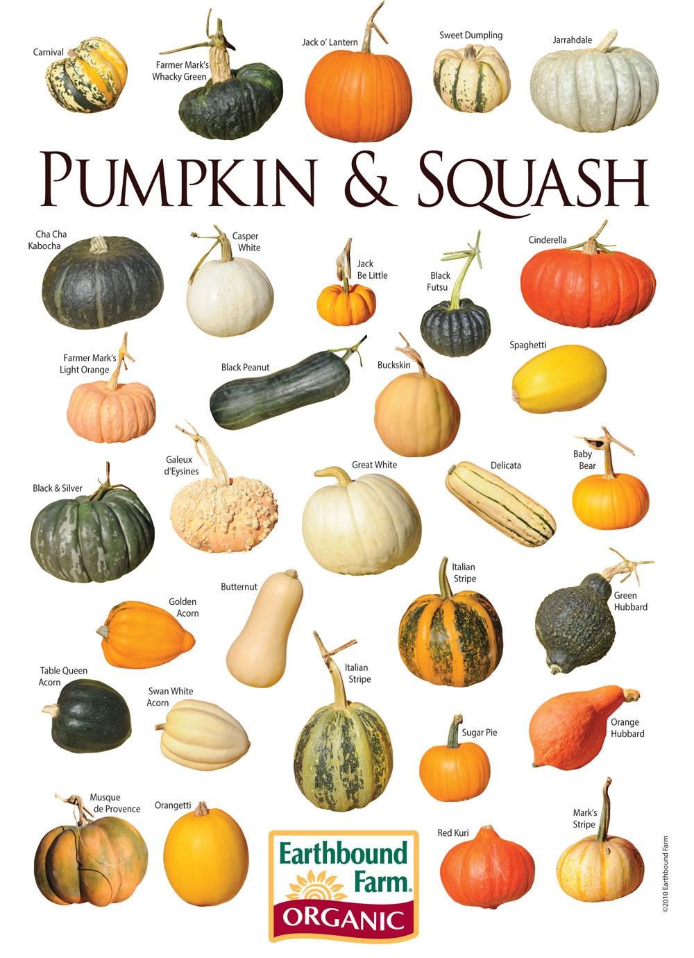 Gourd clipart pumpkin farm (Googled)  com google https://www