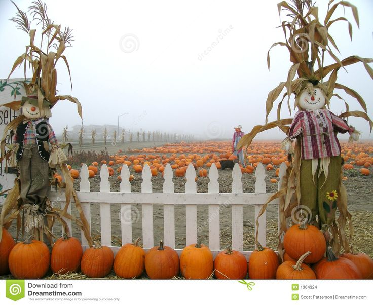 Gourd clipart pumpkin patch About on Pinterest Background in