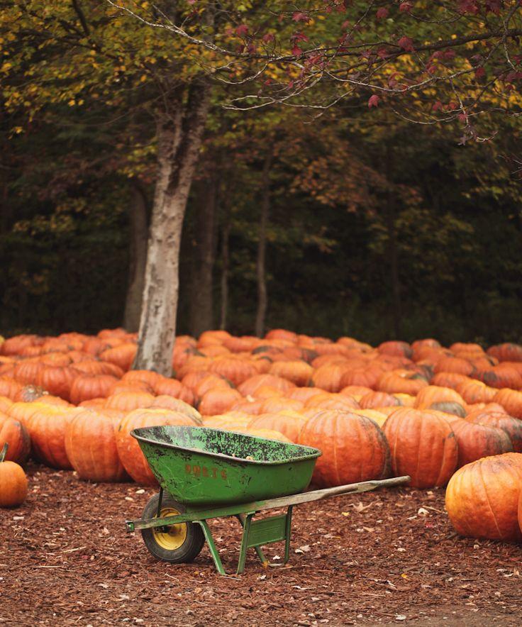 Gourd clipart pumpkin picking Pinterest 307 for Pumpkin sale