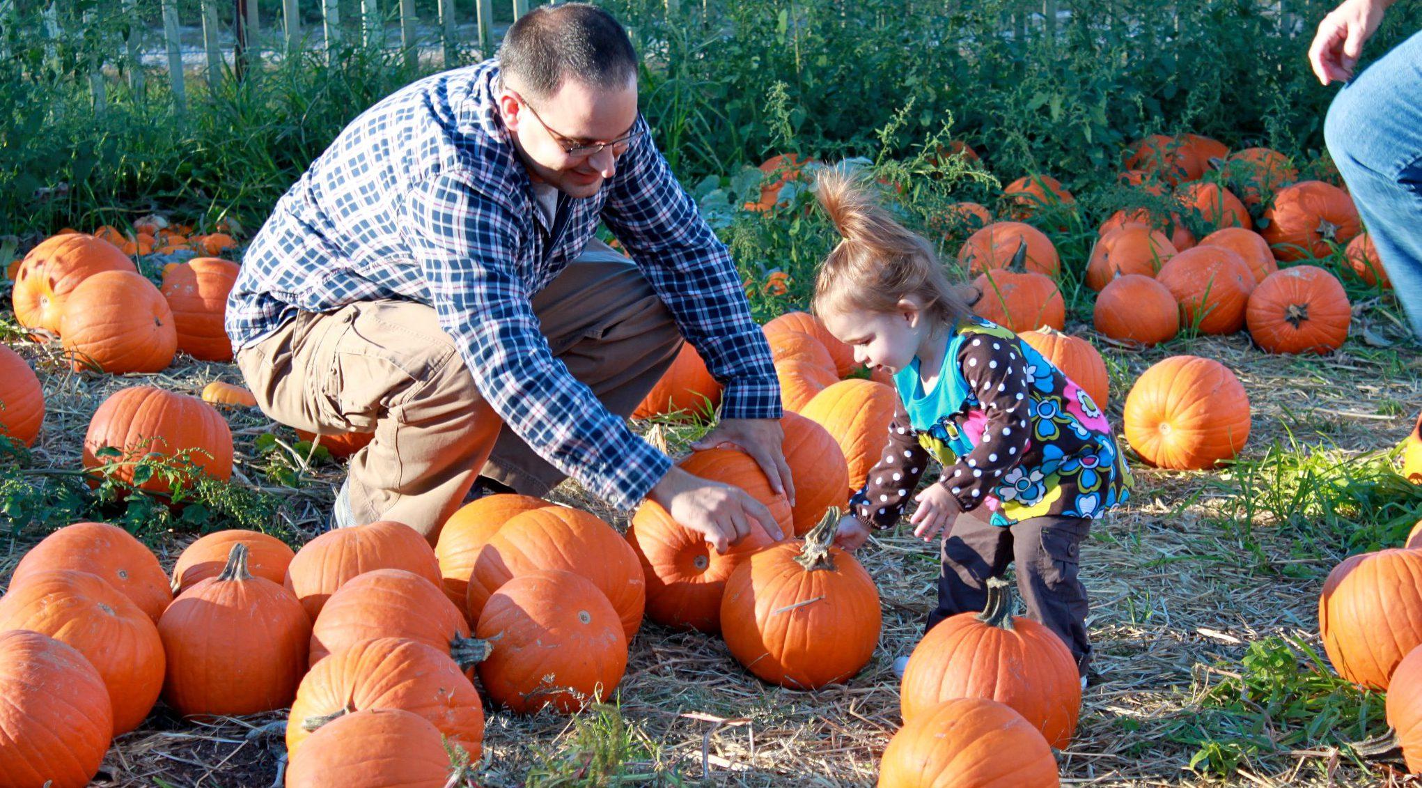 Gourd clipart pumpkin picking Pumpkin Patches Pumpkin Connecticut New