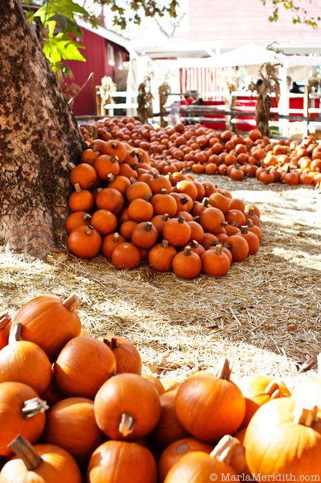 Gourd clipart pumpkin picking Can live want fall FestivalsPumpkin