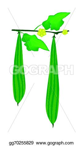 Gourd clipart ridged On A Clipart on green