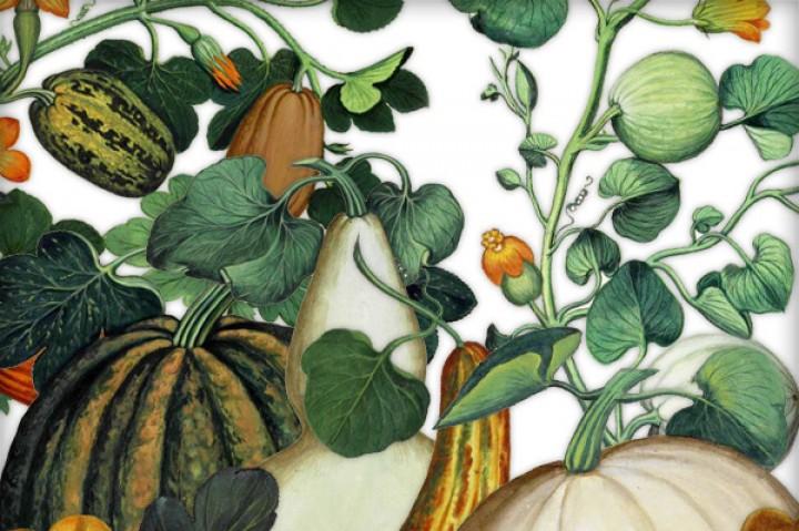 Gourd clipart small pumpkin Pumpkin Gourds & PNG PNG
