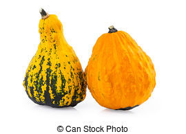 Gourd clipart small pumpkin Gourds  Images pictures Gourds