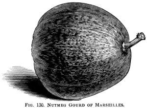 Gourd clipart squash Gourd art clipart marseilles squash