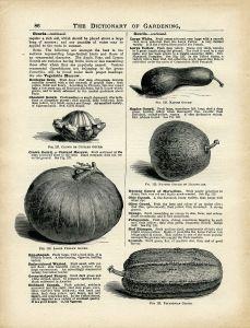 Gourd clipart squash Illustration clip printable vintage art