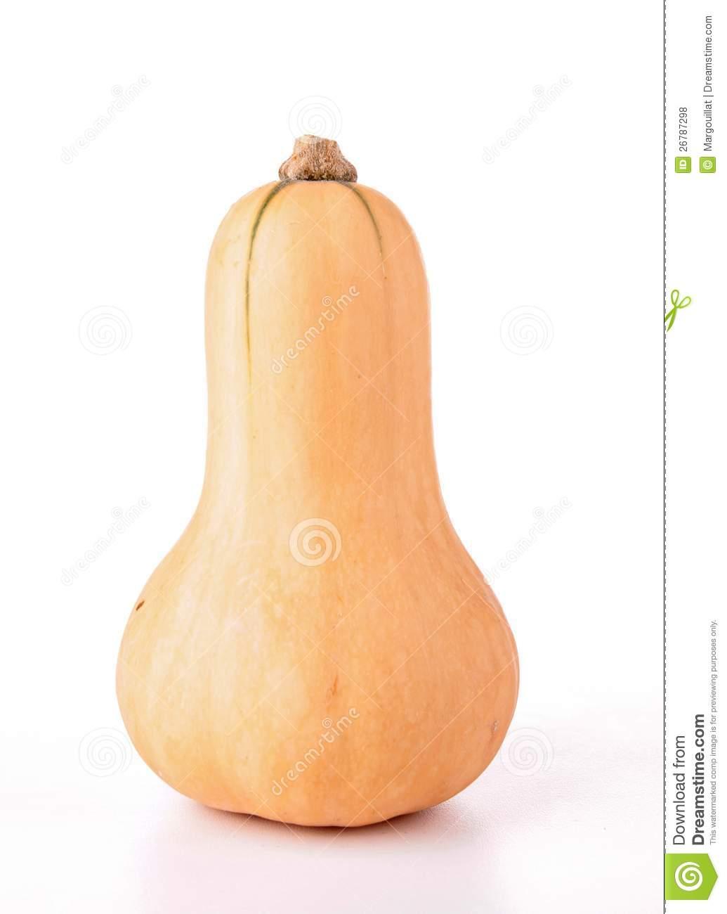 Gourd clipart squash Squash Images Clipart squash%20clipart Free