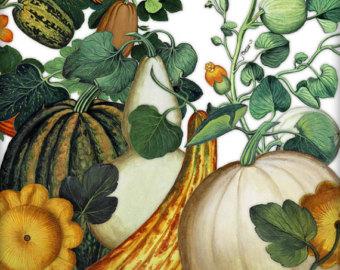 Gourd clipart squash GOURDS Squash Art Clip art
