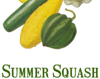 Zucchini clipart summer squash Jpeg of / Digital Etsy