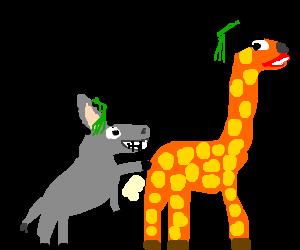 Graduation clipart giraffe High wins Race at the