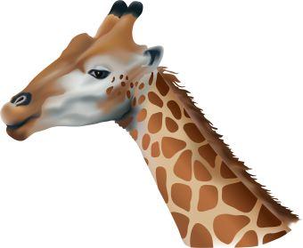 Graduation clipart giraffe Art Giraffe clip