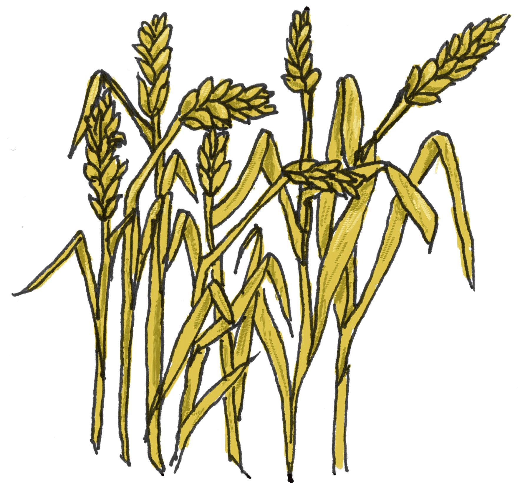 Grain clipart wheat farm Black Clipart Clipart Clipart White
