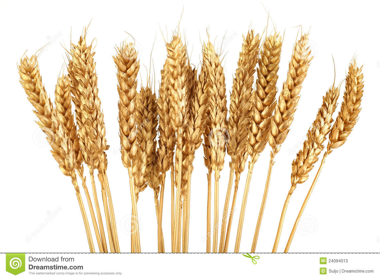 Grain clipart wheat farm Collection Free Maps Art Clip