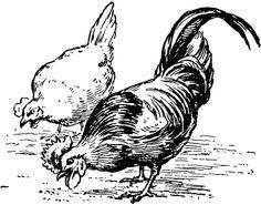 Grain clipart chicken eats Art Chicken Chicken Eating clip