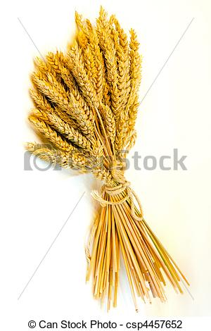 Grain clipart wheat bundle Photo fresh bundle shot Close