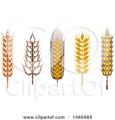 Grains clipart #6