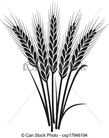 Drawn grain wheat crop White EPS wheat black with