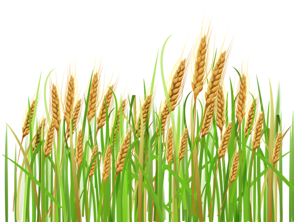 Feilds clipart wheat field Clipart dividers Wheat Cards art
