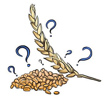 Grains clipart gluten Family for Bad grains as