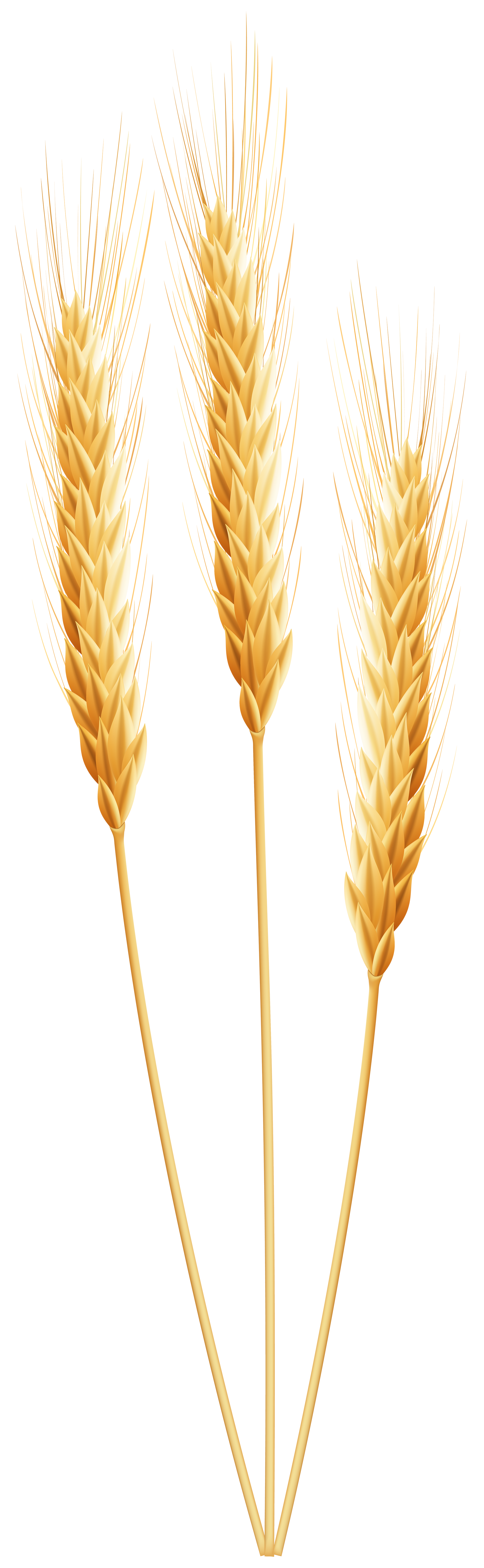 Grains clipart gluten PNG Yopriceville Quality Image Gallery