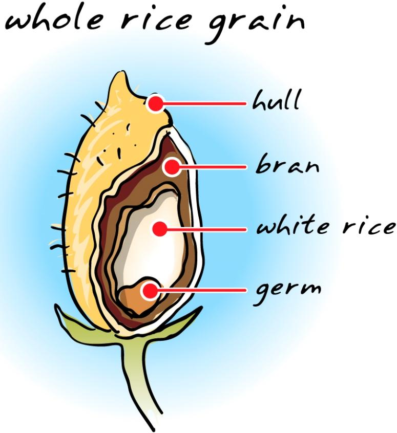 Grain clipart healthy food Free Food  Free View