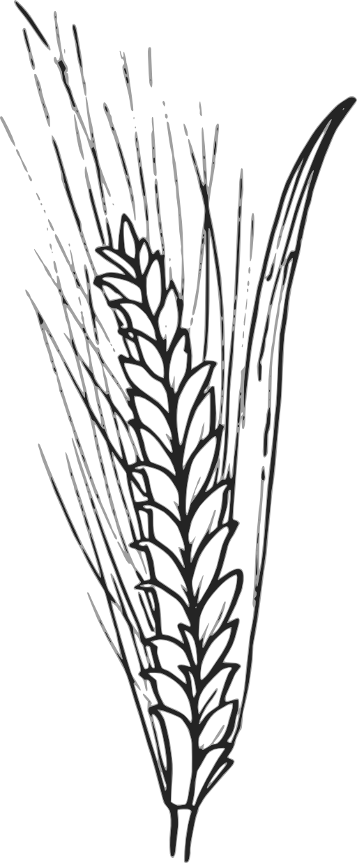 Grain clipart cereal Clip Free  WHEAT Wheat